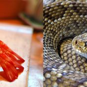 Ebi and Hebi, prawn and snake